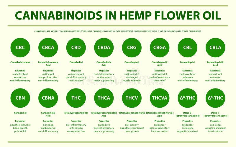 cannabinoids-hemp-flower-oil-horizontal-infographic-cannabinoids