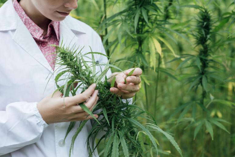 Crop Production in Switzerland- Hemp/Cannabis